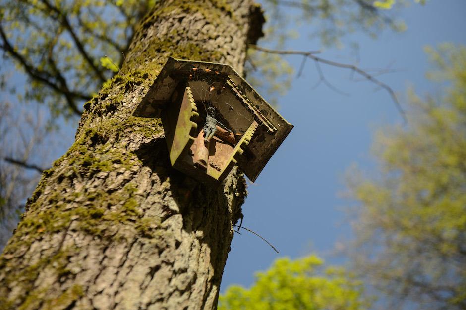 Mit Simon Abeln im Wald