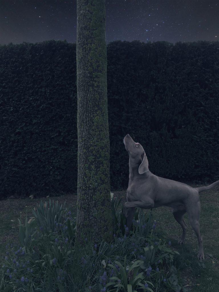 Hund bei Nacht