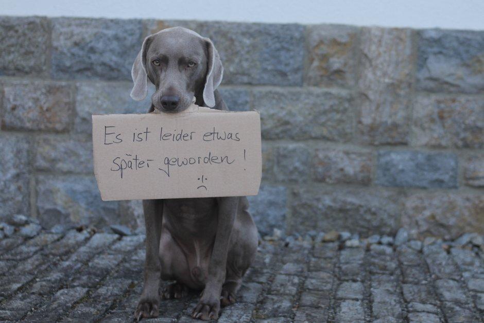 Hund-ueberbringt-Botschaft