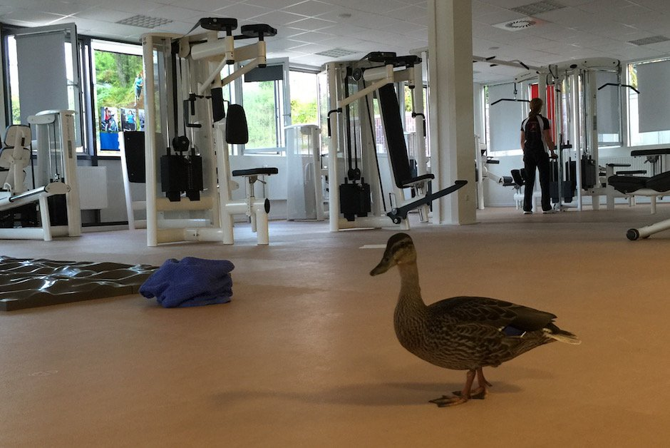 Ente im Fitnessstudio 3