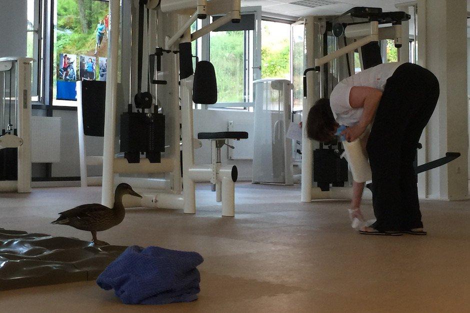 Ente im Fitnessstudio 4