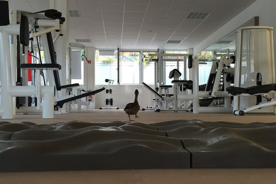 Ente im Fitnessstudio 6