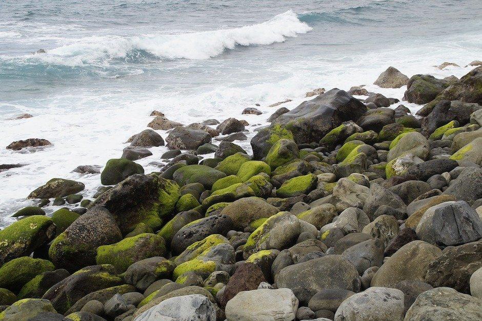 Moos am Meer