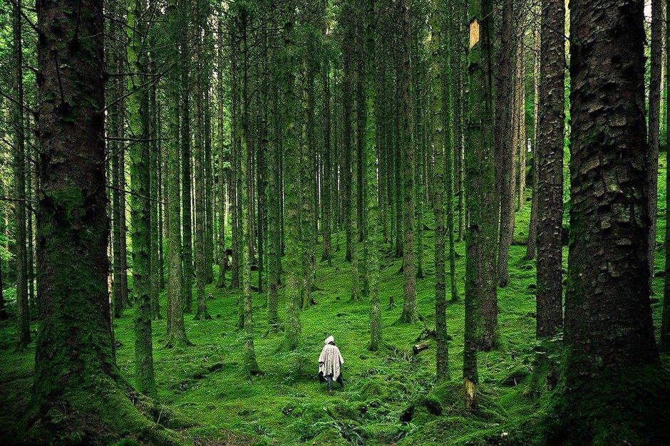 Moos im Fichtenwald