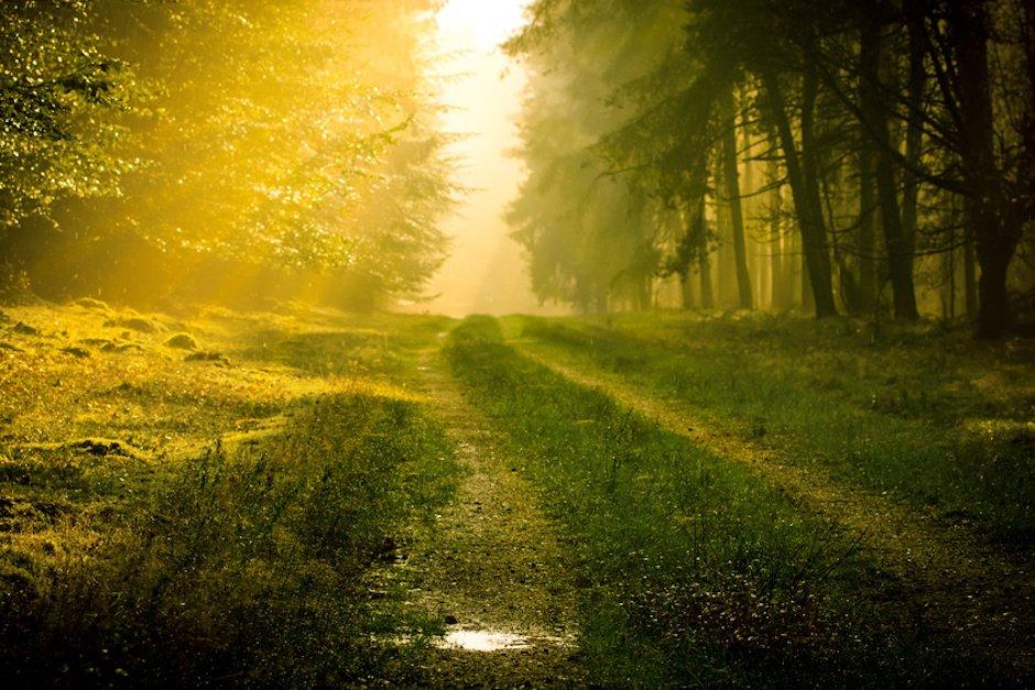 Sonnenstrahlen auf einem Waldweg