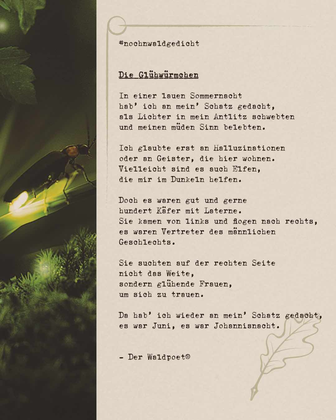 Die-Gluehwuermchen_Low